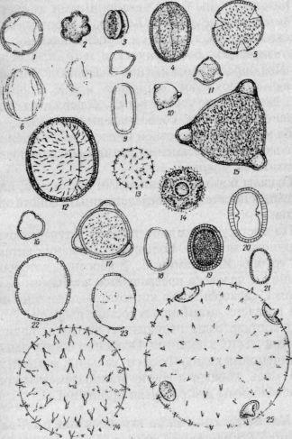 Пыльцевые зерна важнейших медоносных и пыльценосных растений