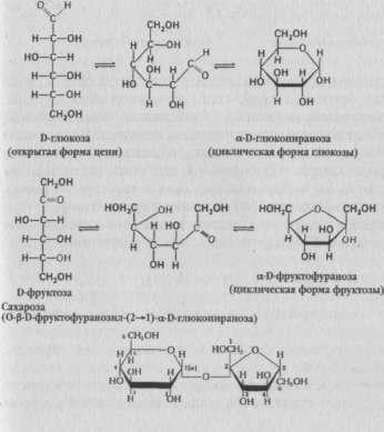 Структурные формулы важнейших Сахаров меда: глюкозы, фруктозы, сахарозы
