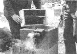 Бессотовая пакетная семья, подготовленная к заселению в улей
