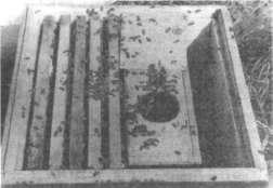 Пчелы переходят из пакета в упей