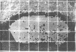 Измерение печатного расплода рамкой-сеткой