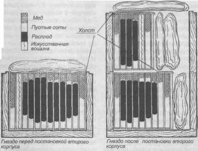 Схема постановки второго корпуса при двухкорпусном содержании пчел в 12-рамочном улье