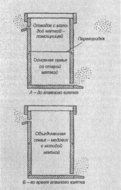 Схема использования матки-помощницы во втором корпусе