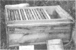 Пчелиная семья карпатской породы в улье-лежаке, подготовленная к зимовке в условиях севера