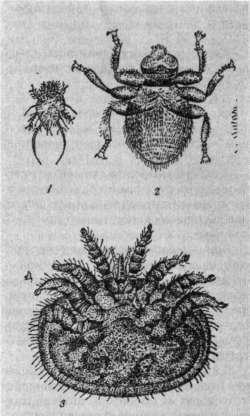 Возбудители акарапидсза (1), браулеза (2), варроатоза (3) и клещ варроа на пчеле (4)