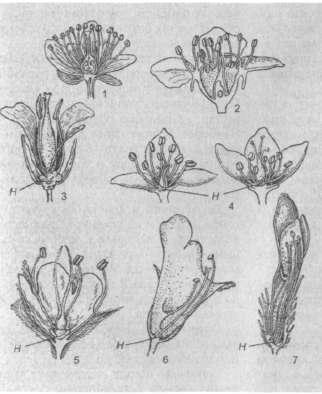 Строение цветков и расположение нектарников у важнейших медоносных растений