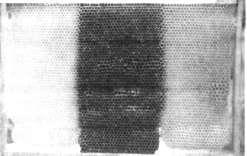 Свежеотстроенные и старый (в центре) участки сота