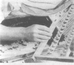 Перенос личинок из ячеек сота в мисочки