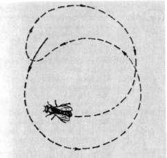 Круговой танец пчел
